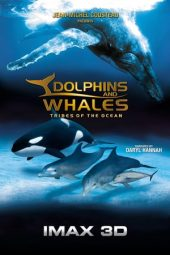 Nonton Movie Dolphins and Whales: Tribes of the Ocean Sub Indo